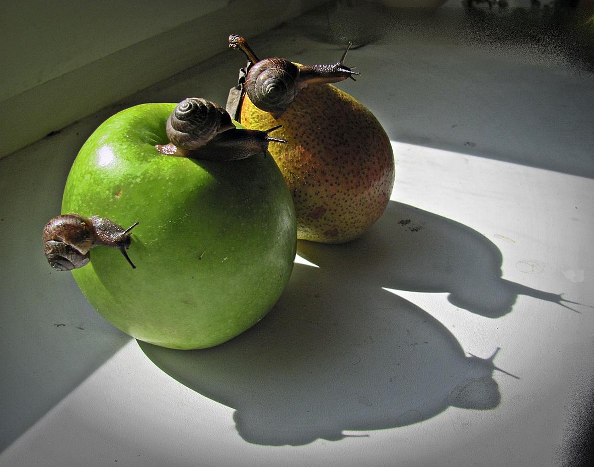 Улитки  яблоко  ТЕНИ*