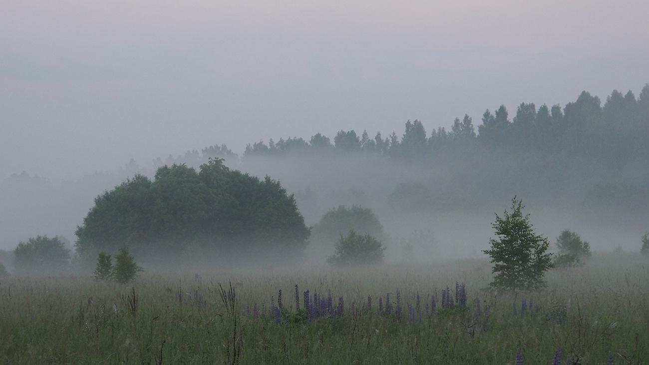туман утро лето
