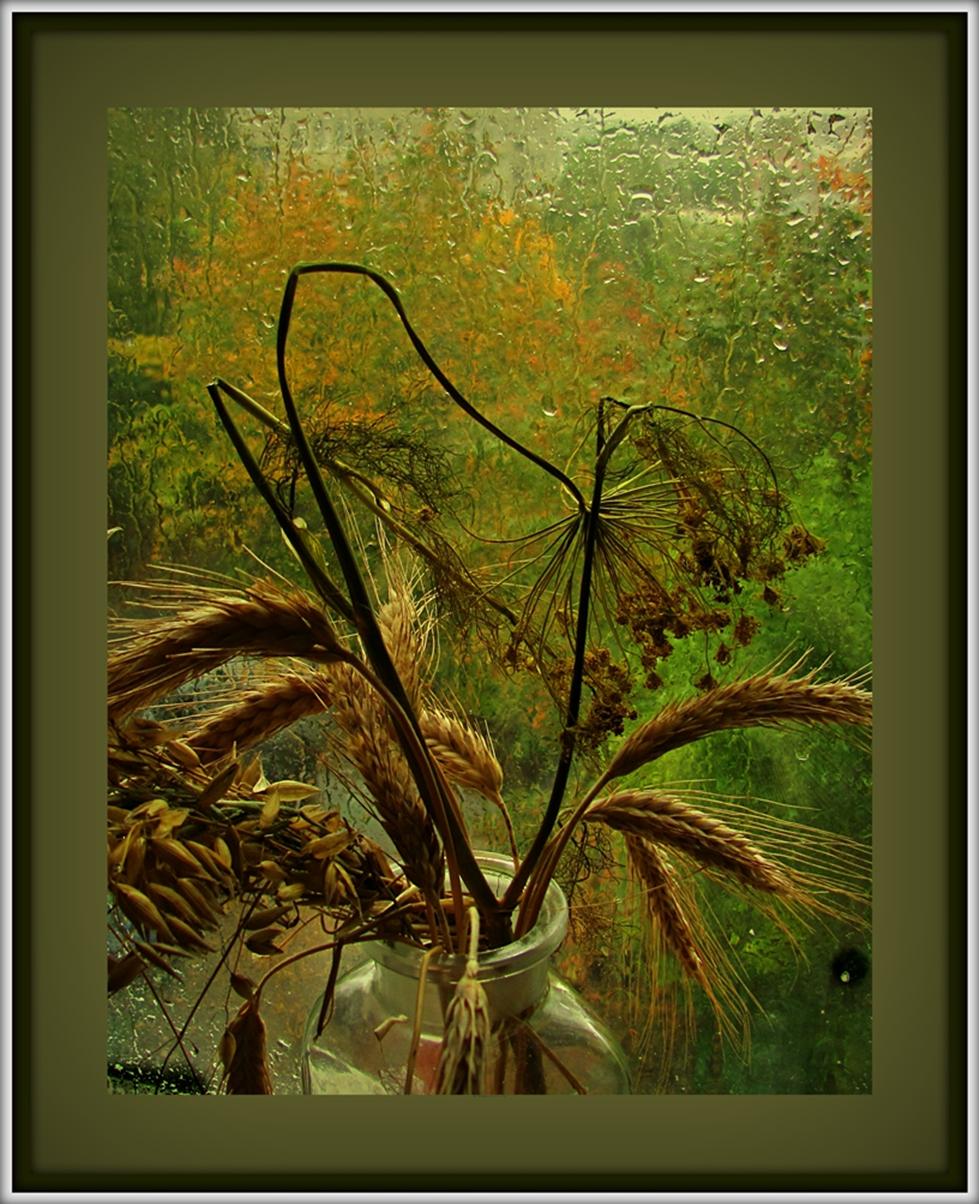 Дождливо .окно .осень