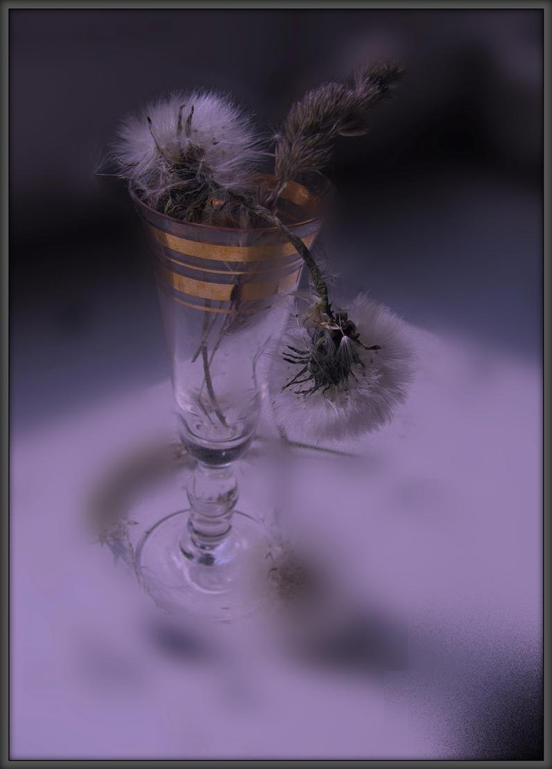 Меланхоличные одуванчики