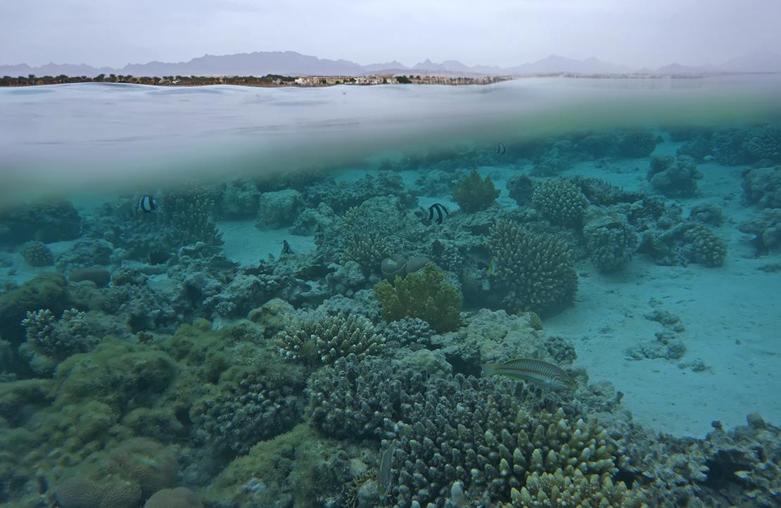 Сплит-фотография- компоновка на одной фотографии части подводного вида и части надводного пейзажа.В профессиональной среде называется как «split-приём», он же «50/50»Раннее утро, Красное море