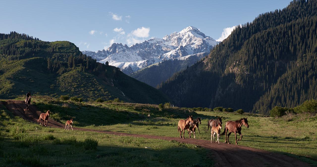 Пастух на рассвете перегоняет лошадей в горах Киргизии.