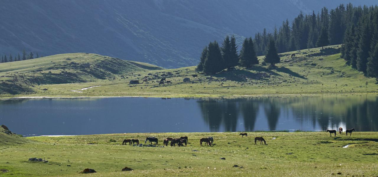 Ранним утром в горах Киргизии.Лошади пасутся на берегу небольшого озерца в ущельях над Иссык-кулем.