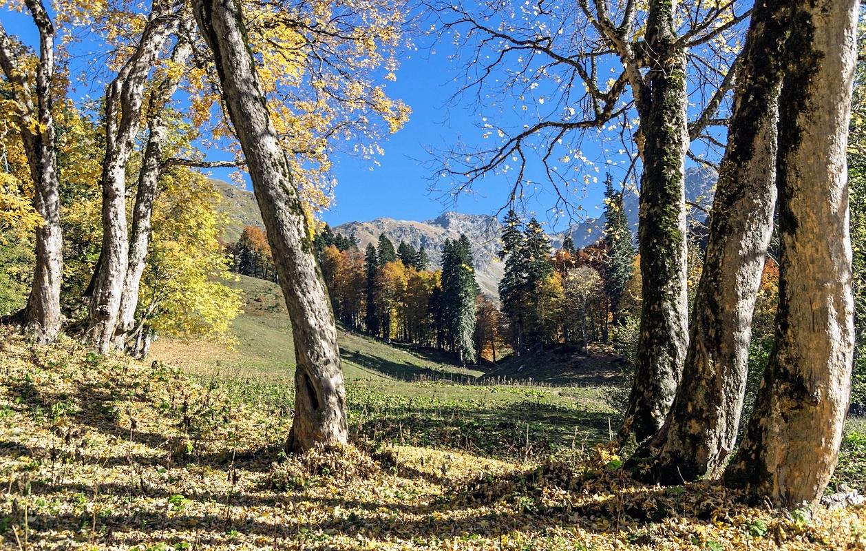 горы, осень