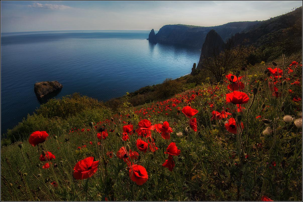 Крым, Весна, море, маки