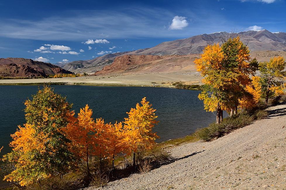 Республика Алтай. Кош-Агачский район. Чуйская высокогорная степь. Осень заглянула с юга. 03.09.17.