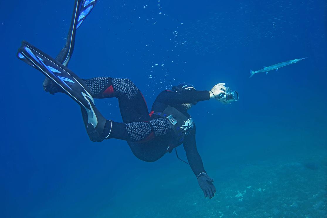 Фотосъемка Красноморского Тилозура на глубине 4- 5 метров.Размер Рыбки около сорока сантиметров.Красное море