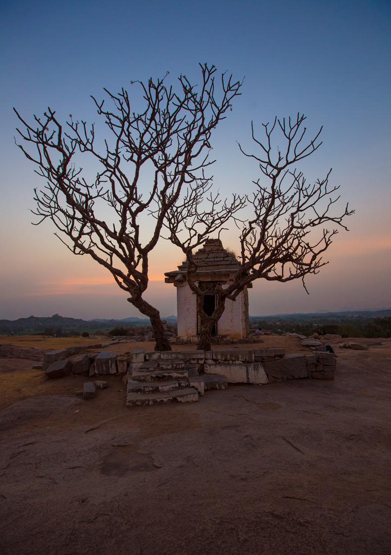 Индия. Хампи. Перед храмом дерево Плюмерия. В засушливый сезон полностью теряет листья.