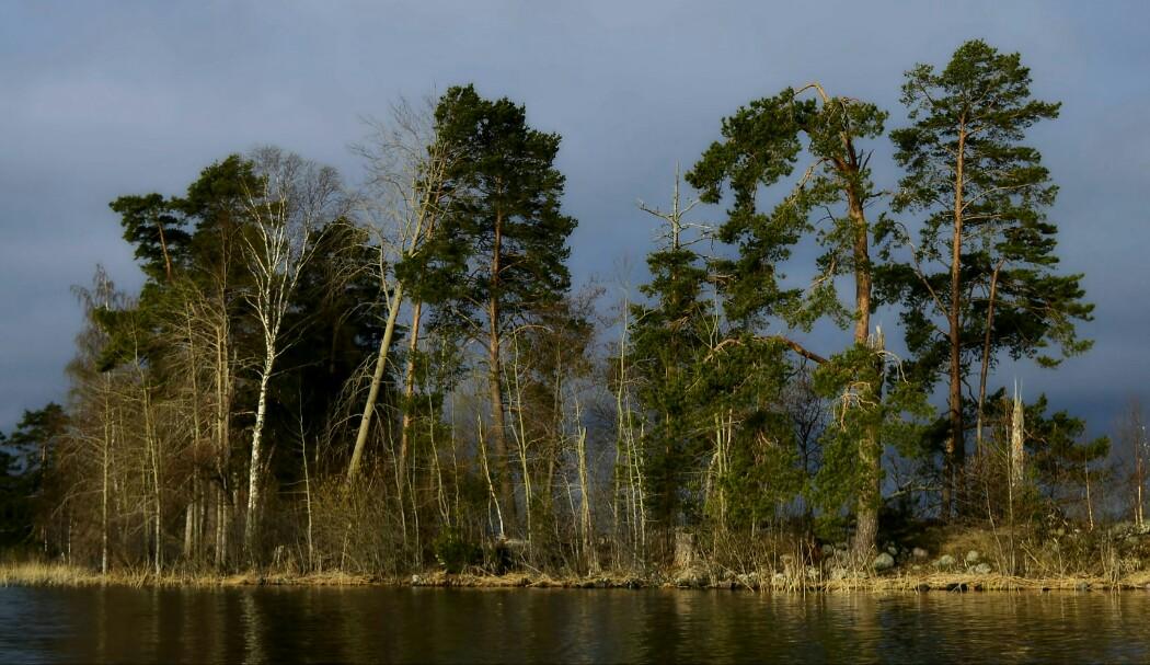 Карельский перешеек. Озеро Вуокса. Май