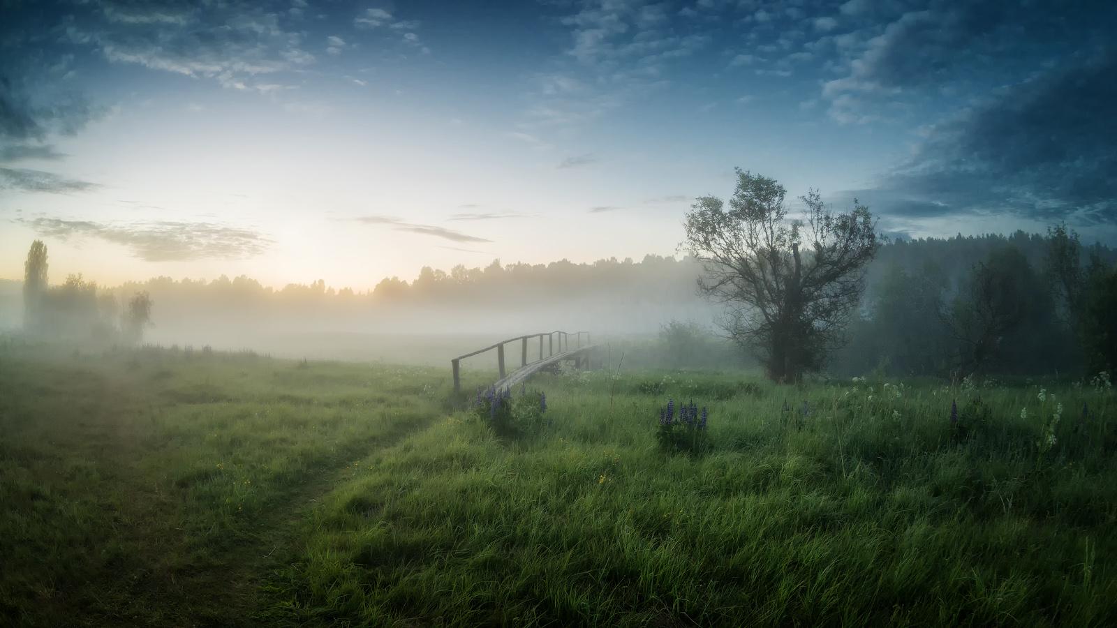 лето, июнь, утропо тропинке в туман