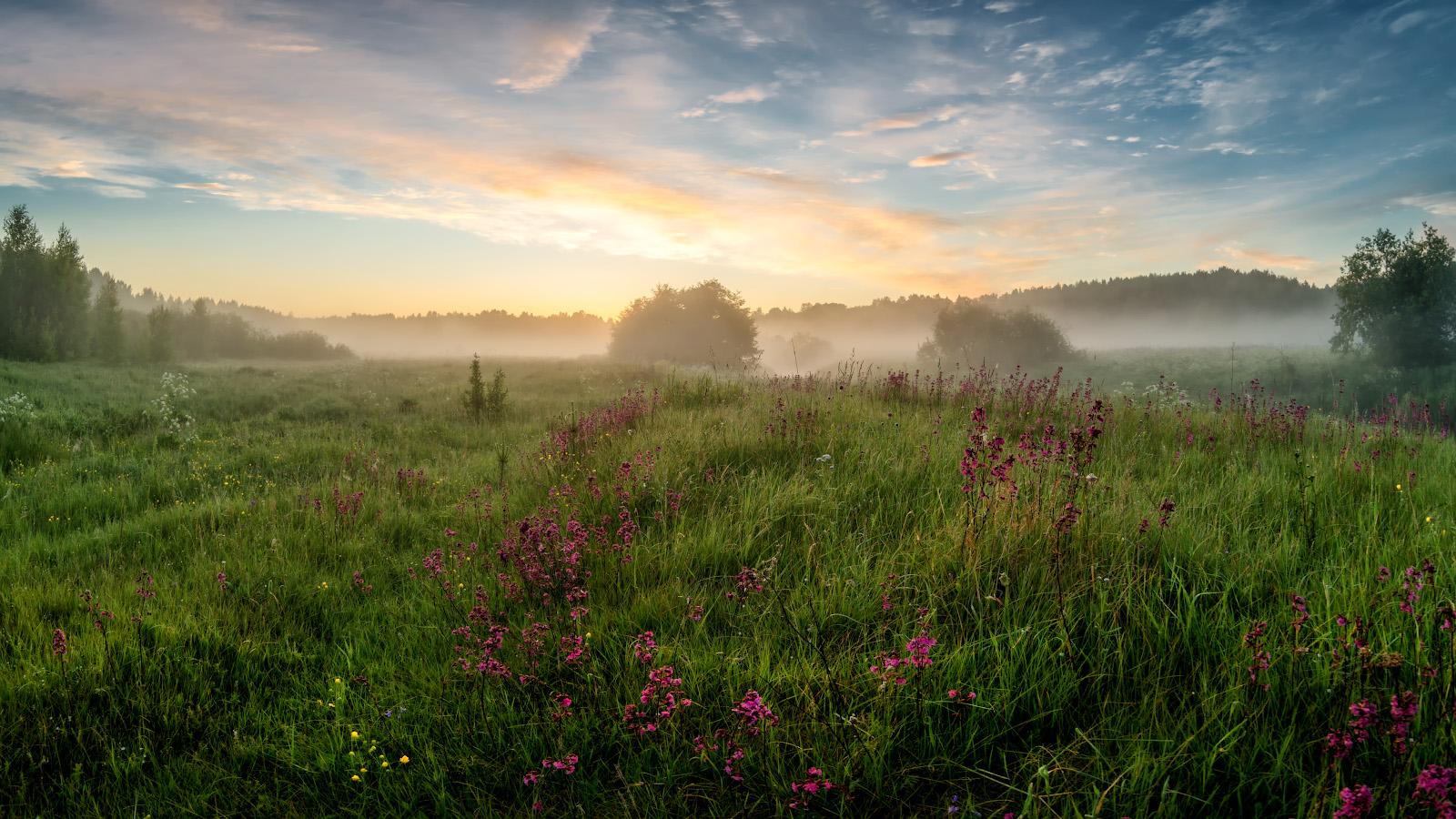 лето, июнь, утродо восхода