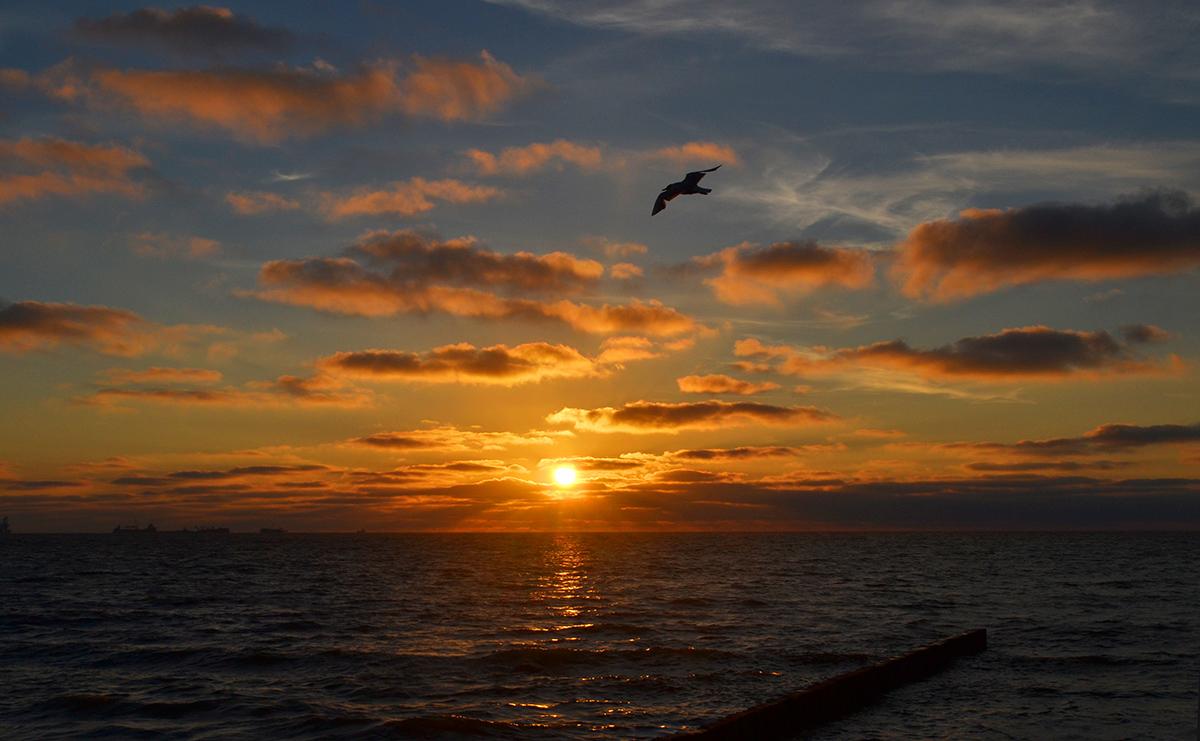 Балтийское море,закат,чайка,Зеленоградск.небо,облака