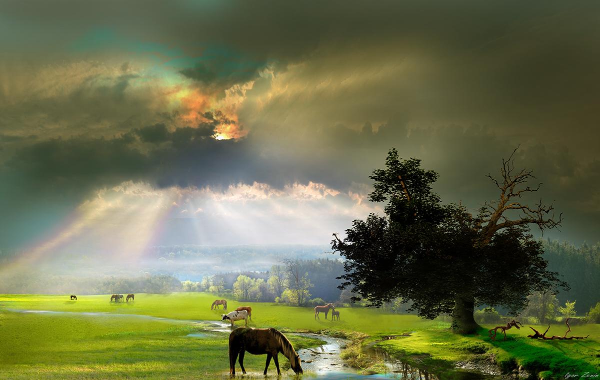 заливные луга,лошади,закат