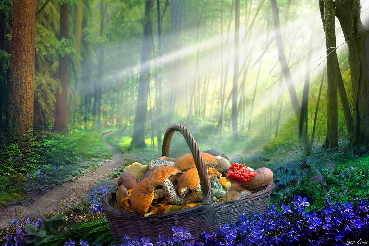 Июль,грибы,лес