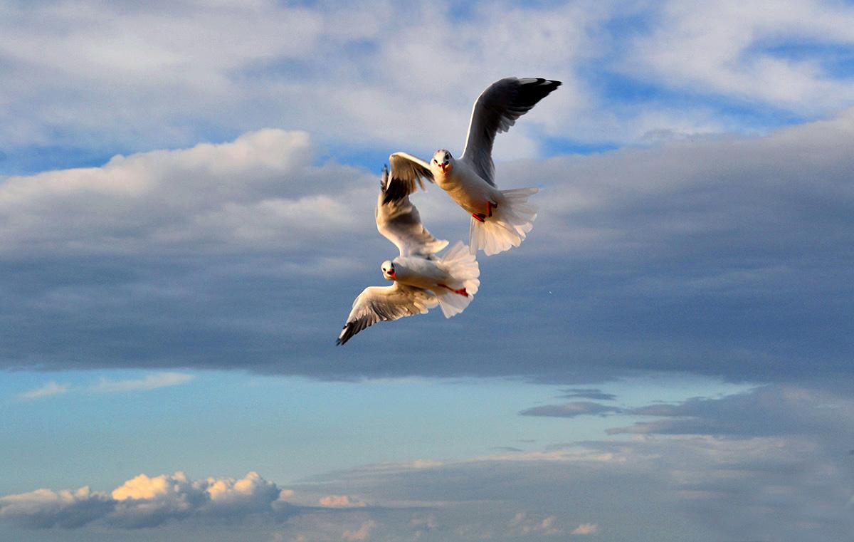 Балтика,чайки,небо,облака