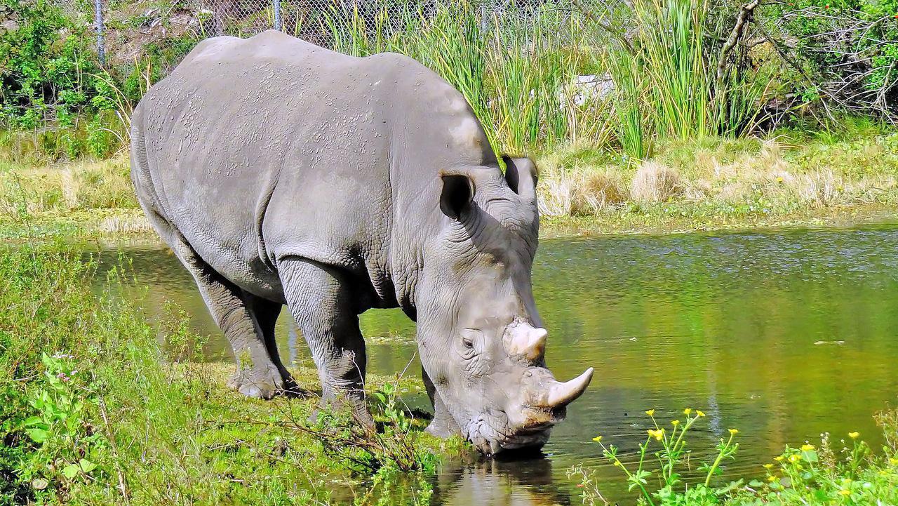 Парк  Lion Country Safari во Флориде. Суть заключается в том, что вы на своем автомобиле проезжаете через прерию и саванну, где без всяких клеток живут львы, носороги, зебры и другие животные. Это конечно не африканское сафари, но все равно невероятно интересно, когда животные разгуливают рядом с твоей машиной, заглядывая в окна!