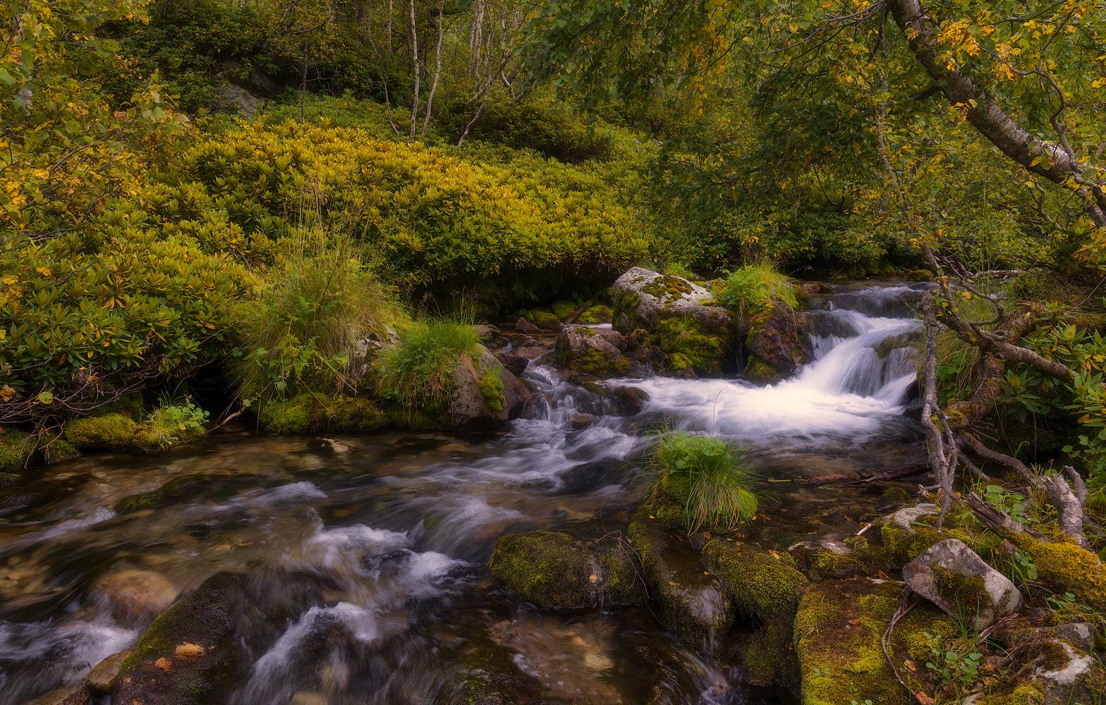 На чистой горной речке начинают желтетьлистья берёз. Отцвёл рододендрон .Свежесть ичистота природы поражают цветом и формами .Архыз одно из таких мест где хочется побыватьвновь .