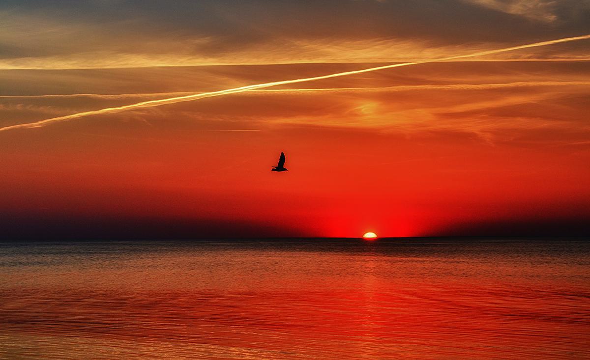 Балтийское море,закат,чайка