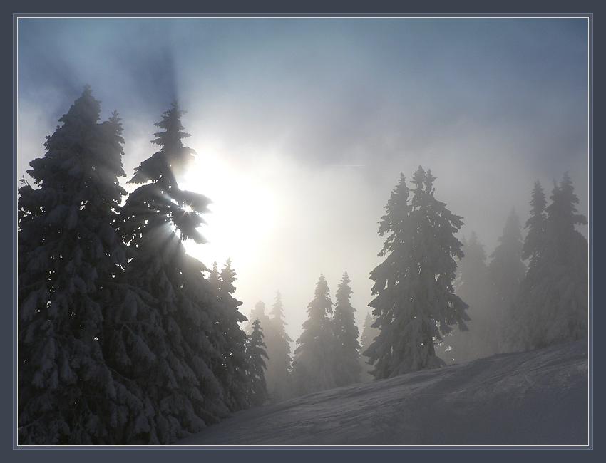 Suisse. M.Niremont. Снег, деревья, облака, солнце.