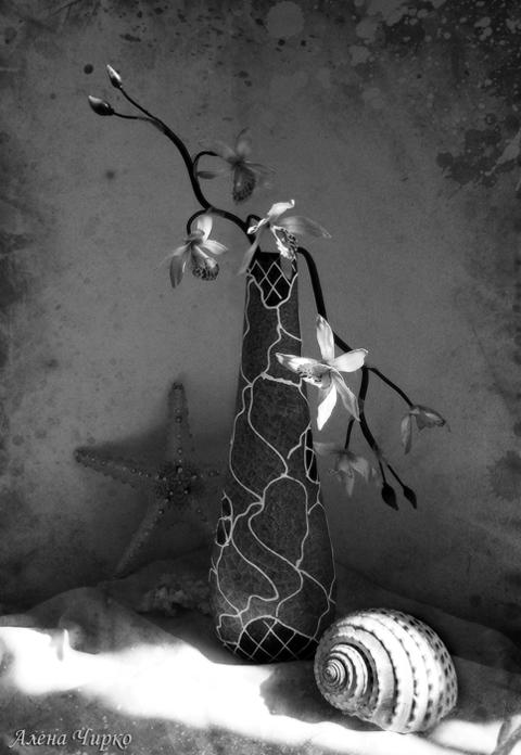 орхидея, луч солнца....