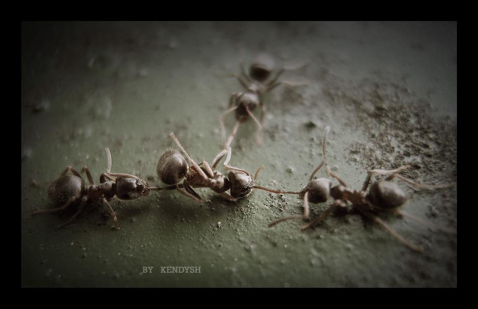 макро муравьи еда