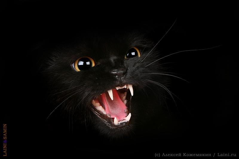 В черной-черной комнате черный-черный кот.