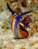 Снимок сделан в Красном море, риф South Fanadir, сентябрь 2007г.