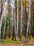 Осень, парк, настроение