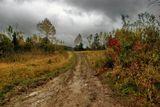 Поселок Тутуяс, Кемеровская область. Идет дождь. Пасмурно, а мы идем в поход за грибами.