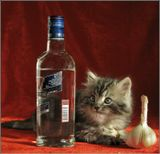 .котенок проявил интерес...