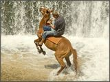 Новоафонский водопад, Абхазия.Резвый абхазский конь под седлом хозяина и молодого наездника.