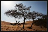 Перу. Пустыня Наска. Снято со стороны оазиса