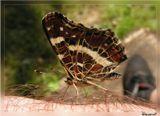 Не каждый день вот так запросто по тебе бабочки ползают...