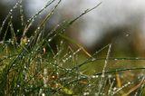 С каждым годом трава зеленее,С каждым веком роса холодней.Я стихи сочинять не умею,Я их просто краду у полей.                            Игорь Бурдонов