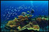 Папуа Новая Гвинея, Коралловое море, Тивали