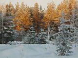 Морозное утро, зимний пейзаж