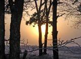 Звенит морозный воздух на заре, густым туманом землю укрывая...  На реке Бурее я часто наблюдаю вот такие туманные восходы.