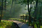 Кузьминки, конец лета, раннее утро. Река чурилиха.