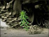 """Волгоград. Как-то забрёл на """"Панораму Сталинградской битвы"""" на берегу Волги. Под гусеницами танка заметил росток ярко-зеленого цвета. Сразу же возникло название будующего фотоснимка- с т о й к о с т ь. Сделал несколько кадров. Один из них показываю Вам."""