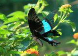 Сочи. Дендрарий. Выставка бабочек.