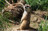 Фото сделано в зоопарке Сан Диего