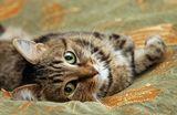 По предыдущей фото вижу что котяра понравился. Выложу ка еще одну его фотку