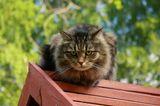 Гуляя в Строгино, случайно заметила этого кота. Он сидел на кормушке для птиц. Выглядело это призабавно. Конечно здесь не видно кормушки, но зато какой взгляд!:)