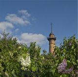Уезжаю в отпуск....  Найдите на фото пятилепестковый цветочек и загадайте желание !!!  :-*