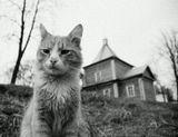 Он суров. Но справедлив! :)Николо-Угрешский монастырь.