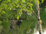 Вечер, дача, весна, пруд...