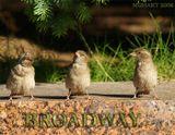 птицы,актеры