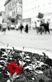 Мы ходим по улицам и не замечаем самого красивого, самого простого....