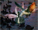 """Фото сделано на берегу бухты при вечерней заре. Вспышка, объектив """"телевик""""птицы полет вечер"""