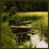 лето речка